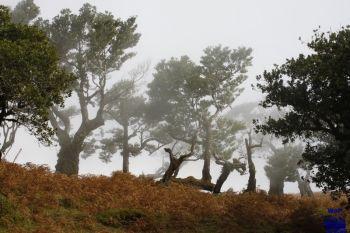 2010 Portugal